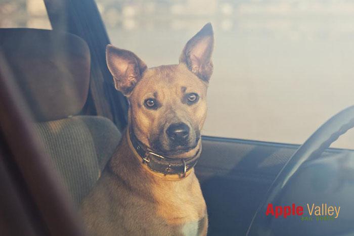 California's Good Samaritan Law and Pets