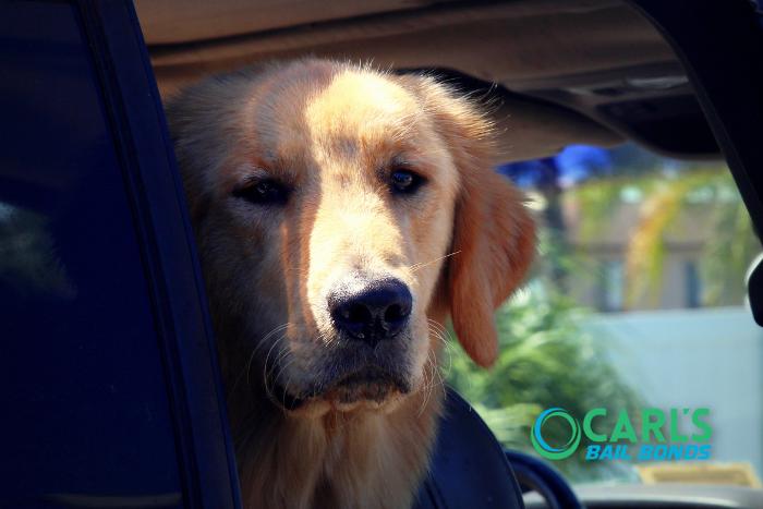 Leaving Pets in Hot Cars in California